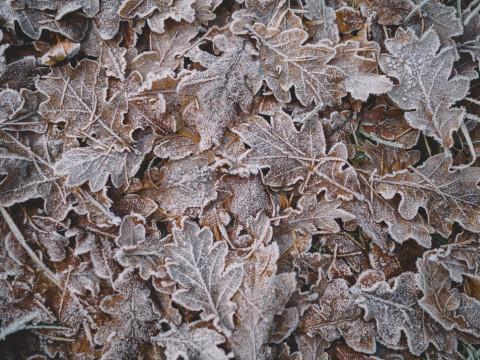 Winterse foto: bib gesloten van 24/12 tot en met 01/01