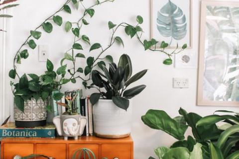 Afbeelding van kamerplanten